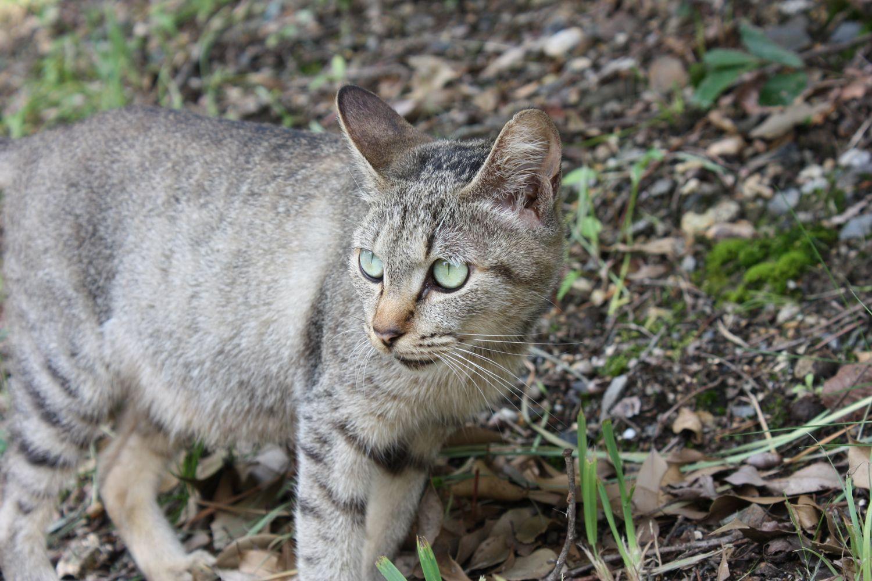 虎渓山PA(上り線)cat