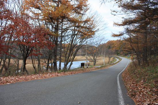 女神湖のカラマツ紅葉